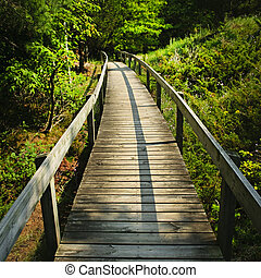 Wooden walkway through forest - Wooden path through forest....