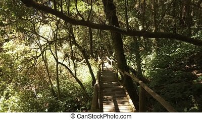 Wooden Walkway through Tropical Rainforest in Thailand - ...