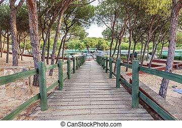 Wooden walkway under pine trees