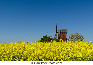 Wooden windmills by a blossom canola field