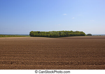 woodland copse in summer - a leafy woodland copse beside...