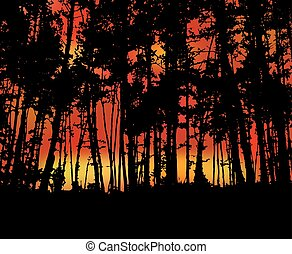 Fire in forest.