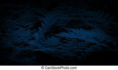 Woodland Ferns In Gentle Breeze At Night - Dense woodland...