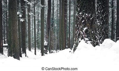 Woodland In Deep Of Winter With Snow Falling
