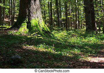 Woodland in Ko?evski Rog - View of woodland in Ko?evski Rog...