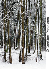 Woodland in winter.