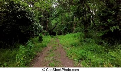 Woodland mysterious landscapes - moving between trees in...