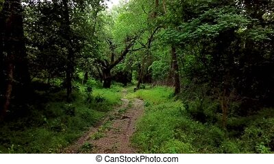 Woodland mystic forest- moving between trees in fantasy...