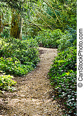Woodland path - A winding path through an ancient woodland