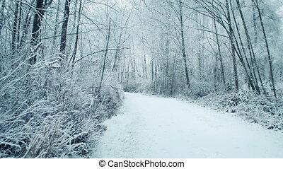 Woodland Path In Snowfall - Pretty winter scene of a path...
