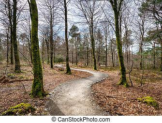 Woodland Path - Path leading through woodland at Hart Woods...