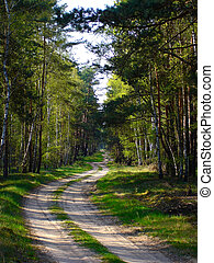 woodland path - lonely woodland path