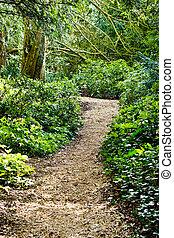 Woodland path - A winding path through an ancient woodland