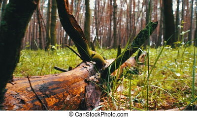 woodland., plants, forest., камера, felled, moves, дикий, ...
