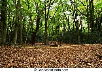 Woodland scene at the start of autumn