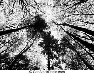 Woodland scene - Spring woodland scene with trees ...