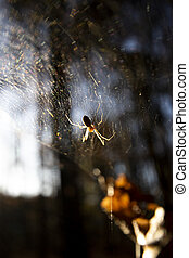 Woodland sider backlit on web with shallow depth of field