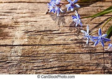 Woodland spring flowers on wood background