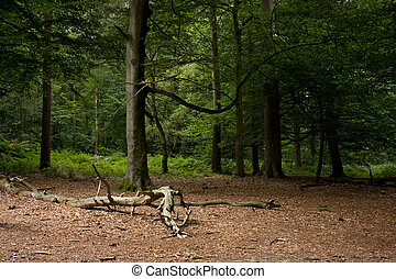 Woodland clearing with dead branch in Ashdown Forest,...
