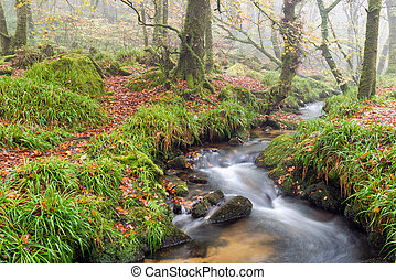 Woodland Stream - A woodland stream babbling over rocks at...