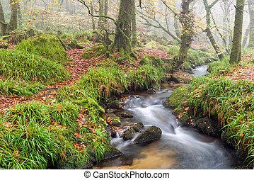 Woodland Stream - A woodland stream babbling over rocks at...