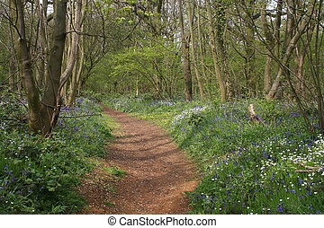 Woodland walk - Peaceful woodland walk. Everdon Stubbs ...