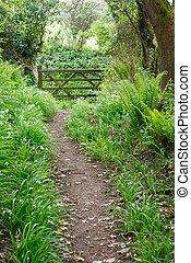Woodland walk with wild flowers. Whiteford, Gower Peninsula, Wales, UK