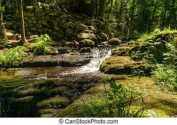 Woodland Waterfall