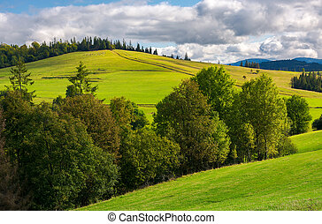 woodlot on a grassy hillside. footpath leads uphill in to...