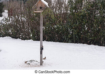 Woodpecker and sparrows at the birdhouse