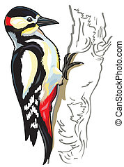 woodpecker - great spotted woodpecker,side view picture...