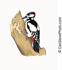Woodpecker - Little woodpecker hammering on a bole.