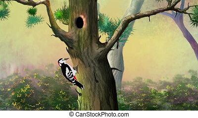 Woodpecker on a Pine Tree - Woodpecker Knocking on a Pine...