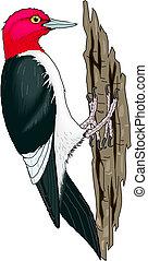 Woodpecker on a tree.