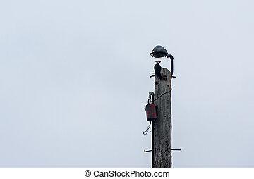 Woodpecker on Pole