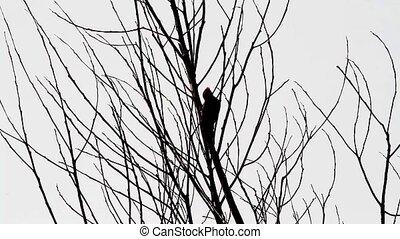 Woodpecker silhouette - Woodpecker Silhouette against an...