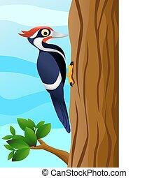 Woodpecker - woodpecker bird on a tree