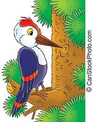 woodpecker - Woodpecker knocking on a tree