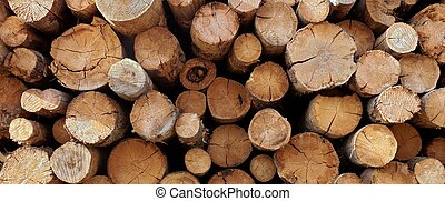 Large Woodpile From Big Pine Logs For Forestry Industry. Background And Texture With Space For Text Or Image