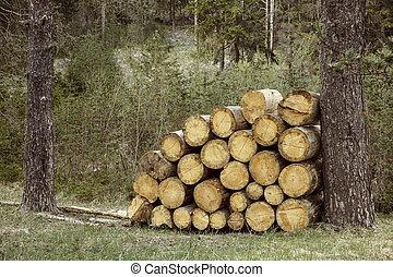 Woodpile of big pieces of cut timber