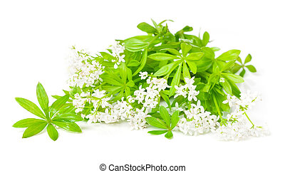 woodruff blossoms and leaves on a white background