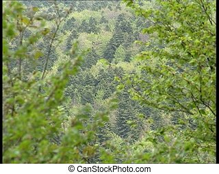 WOODS and branches rack focus - Woods and branches, rack...