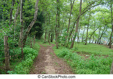 Trail and woods of the landscape in the summer