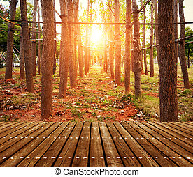Woods at dusk - forest trees. nature green wood sunlight...