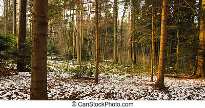 Woods at dusk in winter.