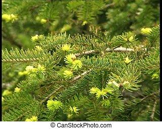 WOODS fir tree branches det1