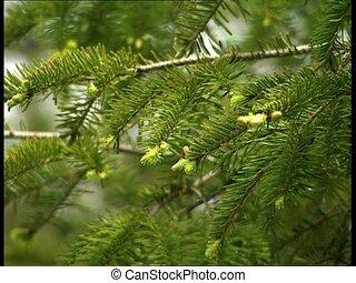 WOODS fir tree branches det2