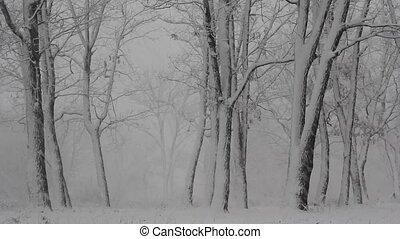 woods., hiver, jour, neige