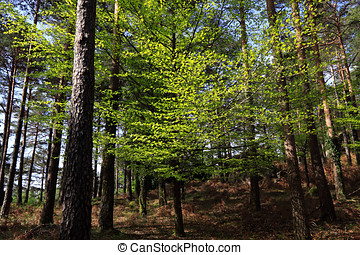 Woods - Mountain woods in a spring morning in the national...