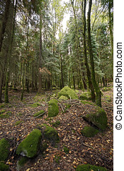 Woods - High mountain woods in National ParK of Peneda-Geres...